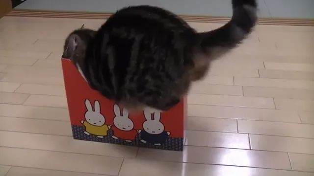 cat wishes for a bigger boxỉ