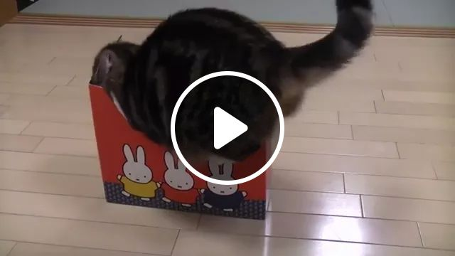 Cat Wishes For A Bigger Boxỉ - Video & GIFs | Animals Pets, Cats, cat breeds, paper boxes