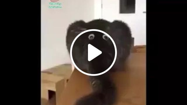 Cat Turns Into A Baby Elephant - Video & GIFs | cat, adorable, animals, pets, elephant