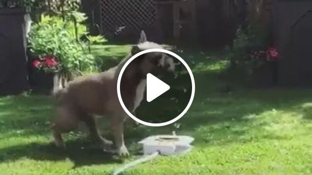 Smart puppy drinks water from automatic tap, Smart puppies, dog breeds, animals, pets, automatic taps