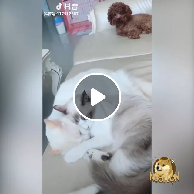 dog is sad to see two cats in living room, Dog, cat, animals, pets, living room, luxurious furniture, luxurious sofa