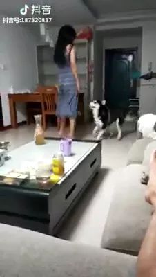 Dog and girl dancing in living room
