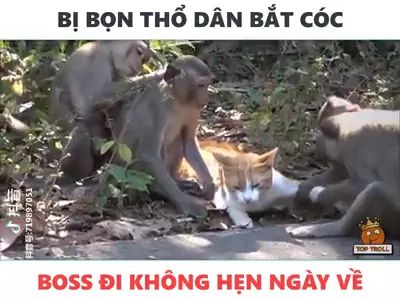Cat and monkey playing