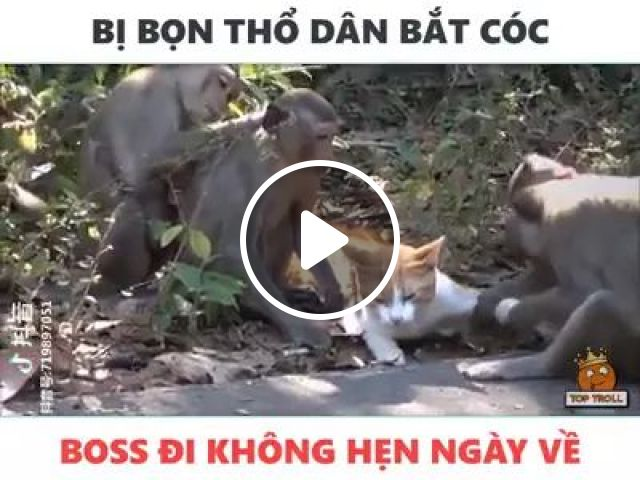 Cat and monkey playing, Cute monkeys, smart cats, funny animals, Indian travel