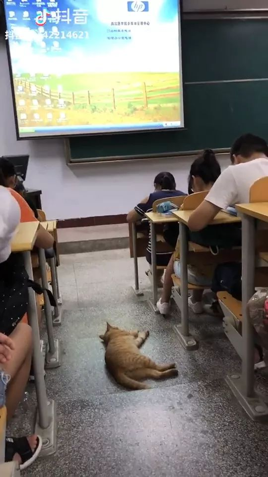 lazy cat is sleeping in classroom
