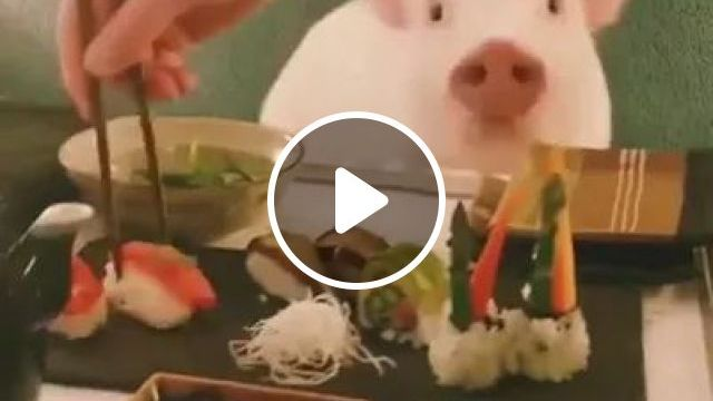 Pig Is Eating Sushis With Stick - Video & GIFs | cute pig, Japanese food, fish sushi, Japan travel, restaurant, lợn