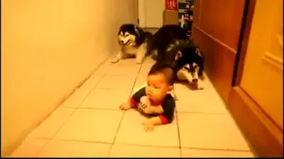 Two dogs crawling along baby in house