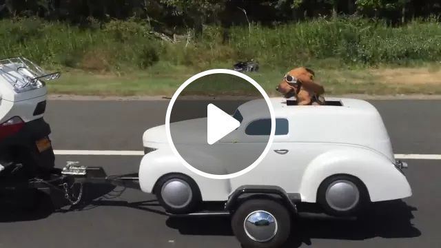 Dog Sat On The Car, And Was Pulled By A Sports Motorcycle On The Road - Video & GIFs   Dog, car, luxury car, motorbike, road