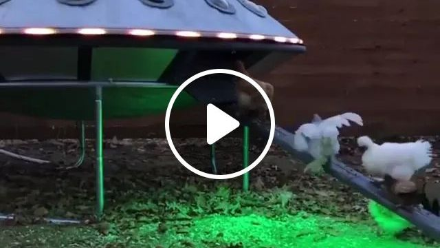Chickens On A Cage Like UFO - Video & GIFs   Smart chickens, chicken cages, funny animals