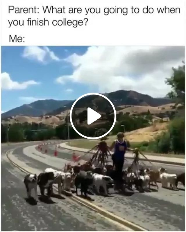 What Are You Going To Do - Video & GIFs   men, dogs, hanging out, street
