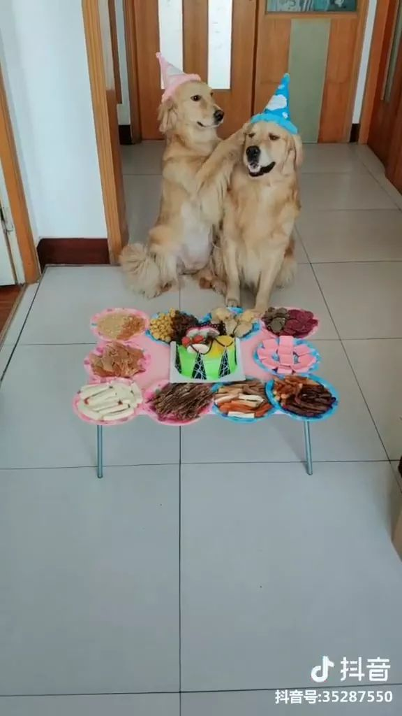Birthday cake and delicious food, two dogs are very happy - Video & GIFs | Birthday cakes, delicious food, dogs, animals, pets, care, fun