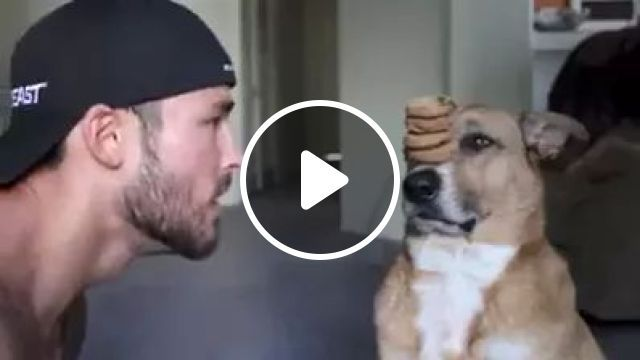 A Man Instructed Dog To Balance Cakes On His Nose - Video & GIFs   Men, men's fashion, dogs, pets, animals, dog breeds
