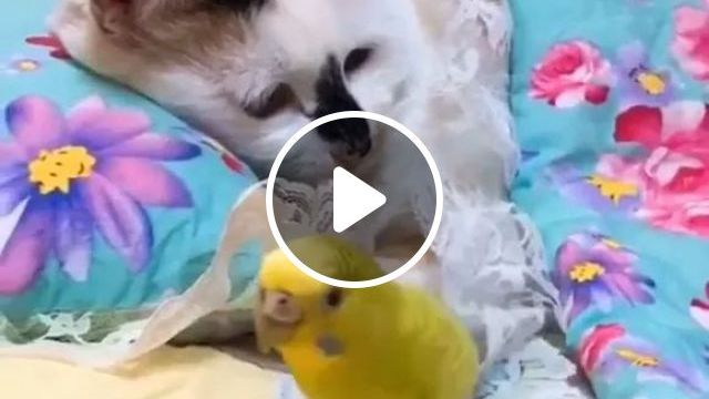 Cat And Parrot, Both Traveling Together - Video & GIFs   cat, parrot, friendly, Dubai travelr
