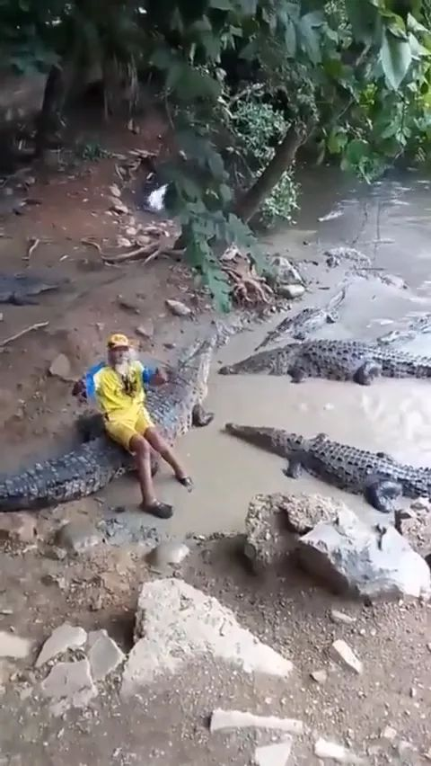 This man is king of crocodiles
