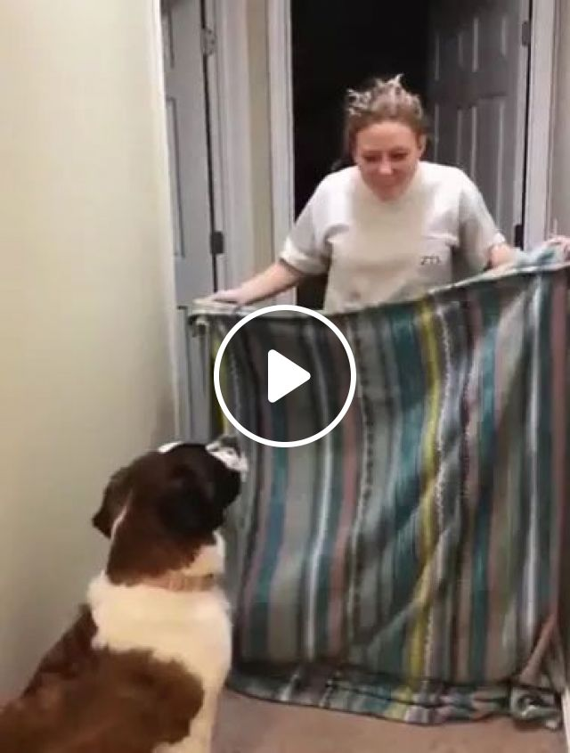 Girl Hit Wall, While Trying To Hide Her Dog - Video & GIFs | beautiful girls, brick walls, cute dogs, dog breeds, funny animals