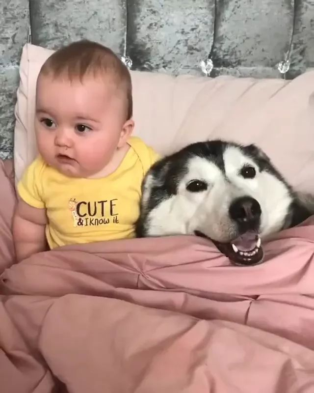 Baby and dog are friendly