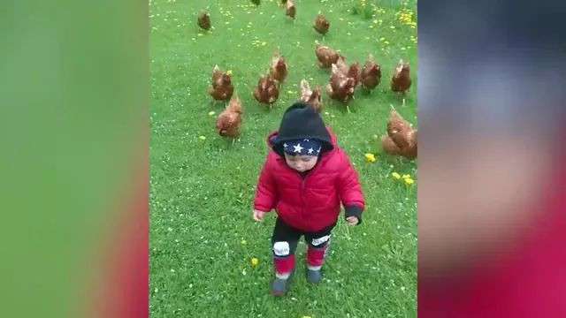 baby looks like leader of chickens