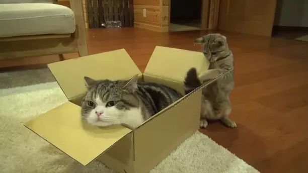 Cats Like Cardboard Boxes