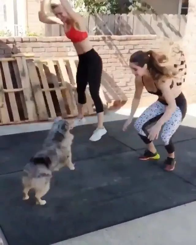 Dog and girls exercise together to lose weight and protect health - Video & GIFs   Dog, adorable, animals, pets, girls, sports fashion, sports shoes, together to exercise, lose weight, protect health