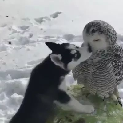 Dog and cat owl are friendly