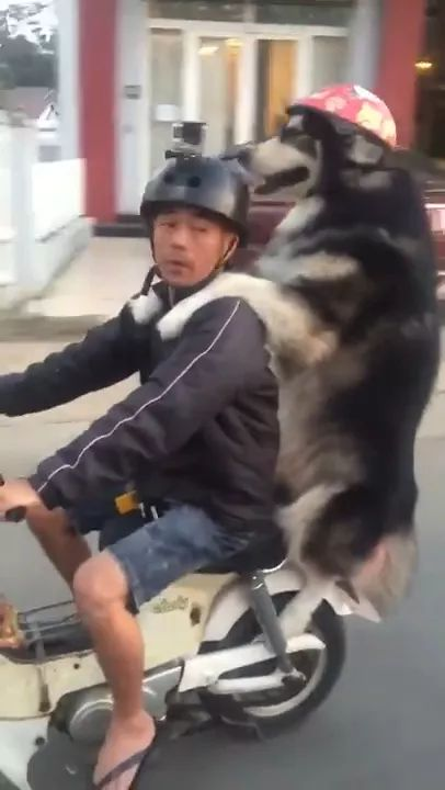 Helmet-wearing dog rides motorcycle with owner