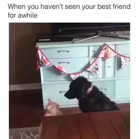 Cats and dogs are friends - Video & GIFs | cat, dog, friendship, friend, hug, friendly