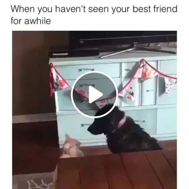 Cats And Dogs Are Friends - Video & GIFs   cat, dog, friendship, friend, hug, friendly
