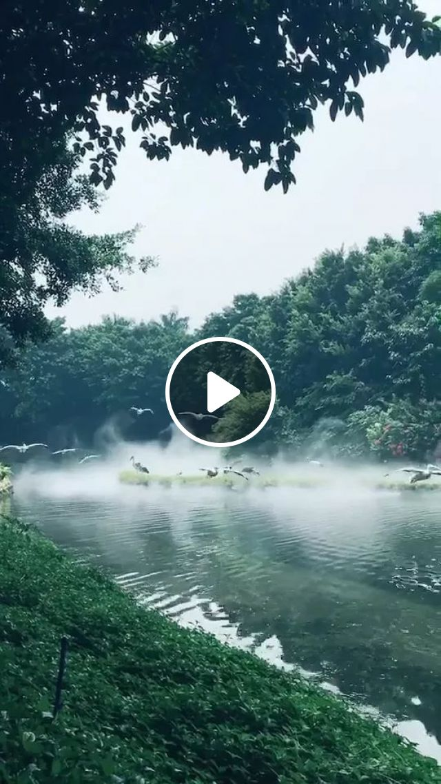 In Forest Of Birds Flying Through Lake Is Wonderful - Video & GIFs | Forests, cute birds, lake fish, beautiful nature, Japanese travel