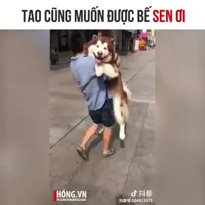 dog wishes to be carried away by him - Video & GIFs | dog husky, smart dog, china street, friendly animal, kind man, male fashion clothes