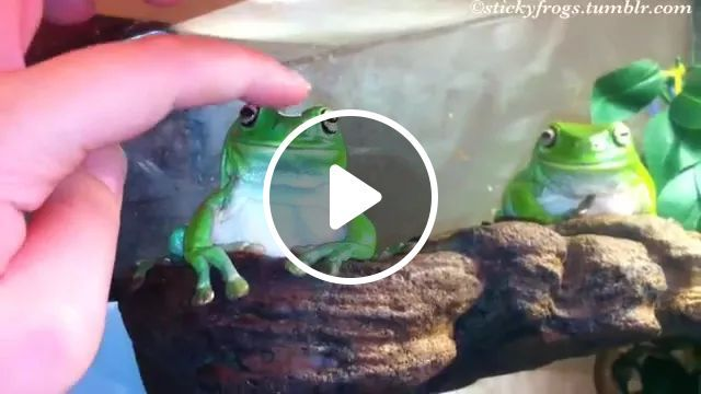 Green Frogs Are Friendly - Video & GIFs   animals, pets, take care of pets, frogs