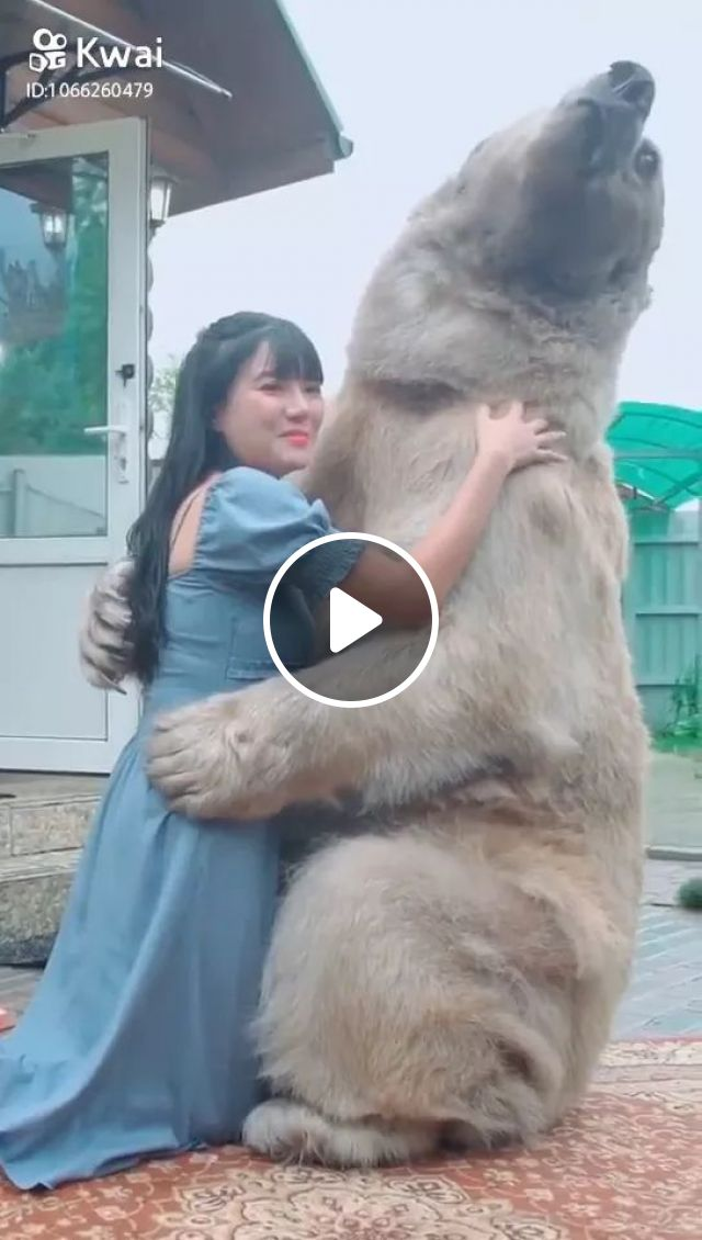 Bears and humans are friends, human, hug, bear, friendly, friend, lovely, Russia travel