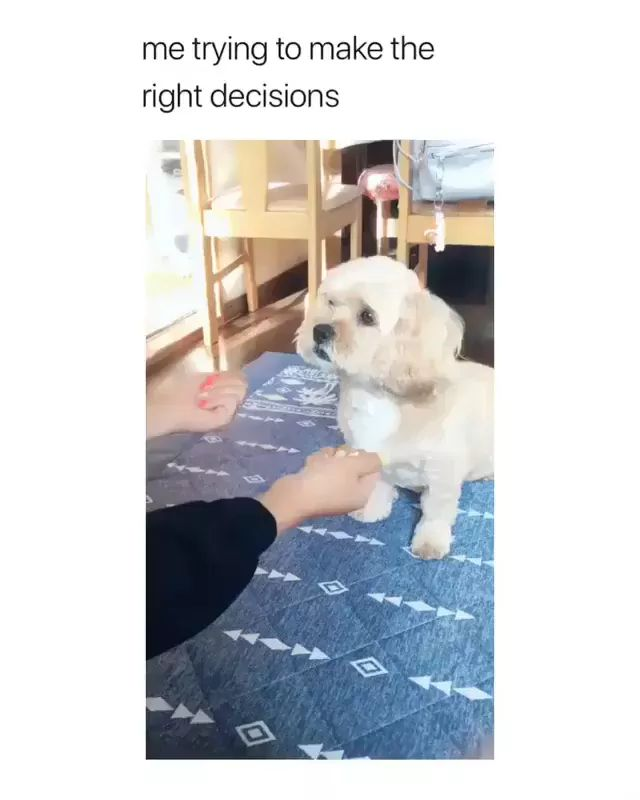 Smart dog looking for food - Video & GIFs | Smart dogs, looking for food, funny animals, luxurious apartments