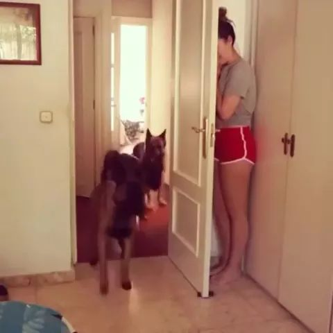 dog is looking for girl in apartment