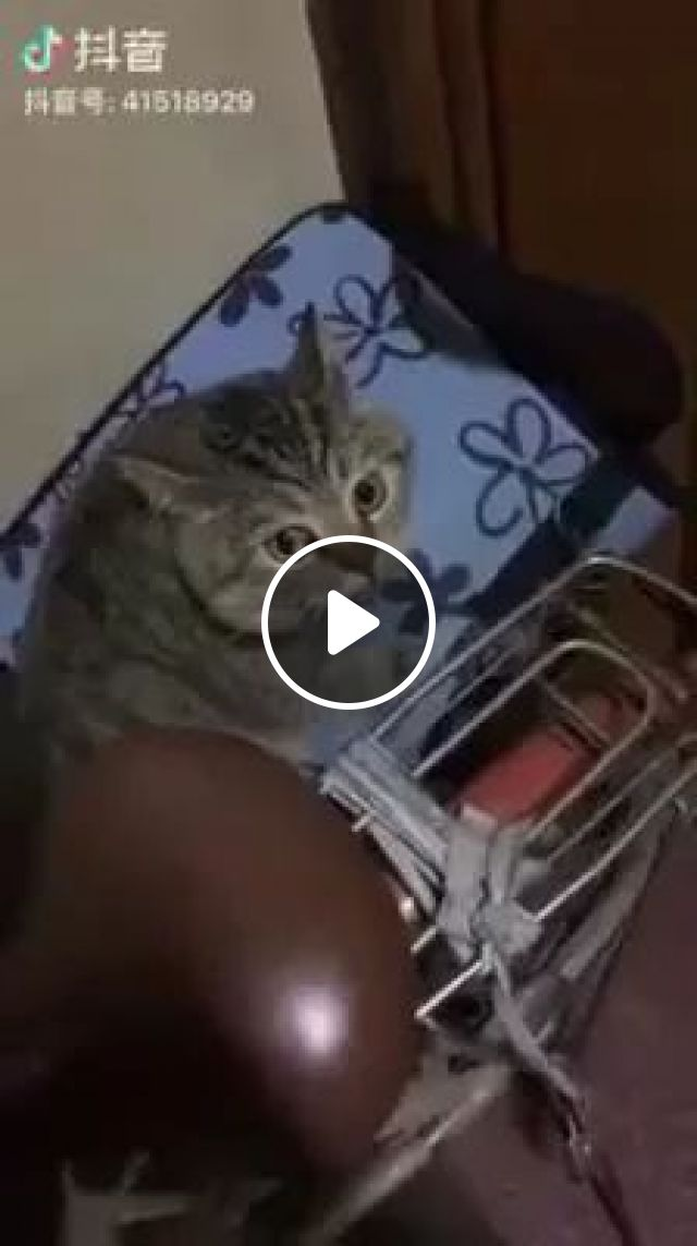 Talented Cat Can Sing - Video & GIFs   girl, cat, talent, sing