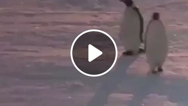 When you win an argument, Cute penguin, winter snow, funny animals