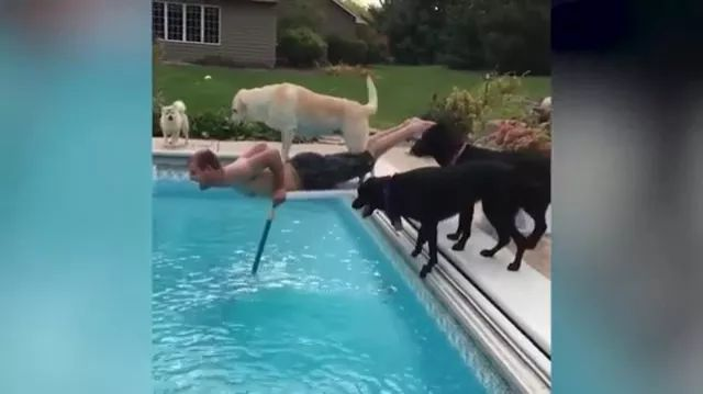Man and dogs in pool