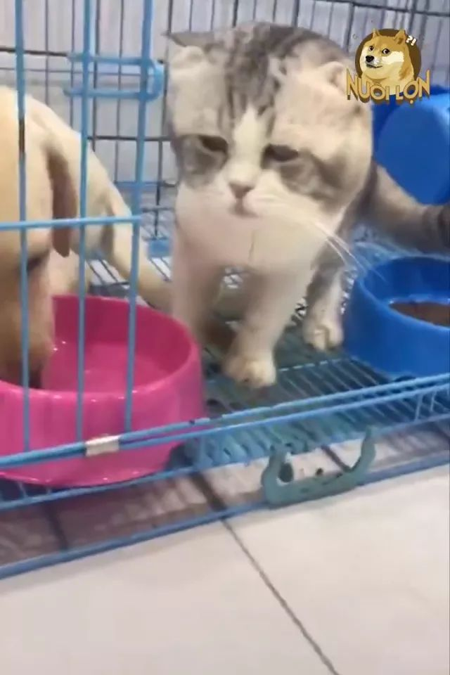 when cat drinks water and feels water is not good