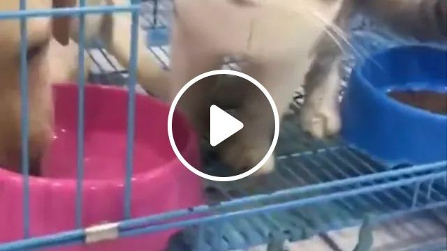 When Cat Drinks Water And Feels Water Is Not Good - Video & GIFs | Cute dogs, smart cats, delicious water, dog cages, cat cages, funny animals