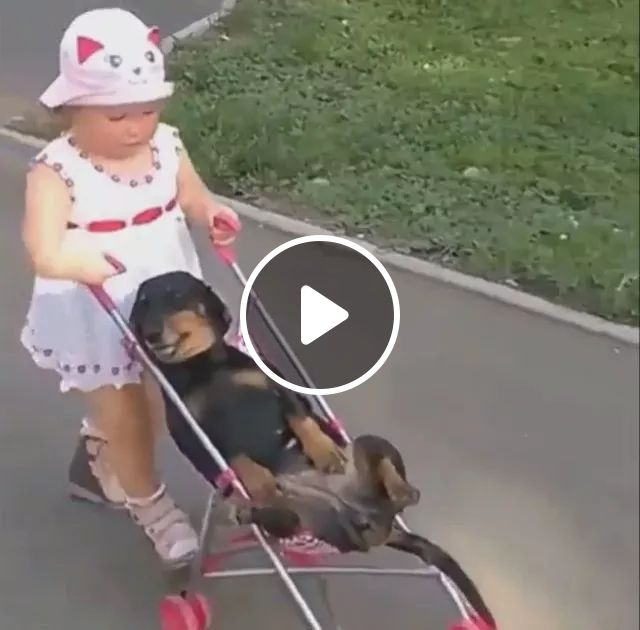 Dog Is Carried By Baby On A Baby Stroller In Park - Video & GIFs   Cute baby, baby clothes, baby stroller, cute dogs, dog breeds