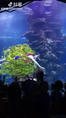 She dives and dances with fish - Video & GIFs | Cute girls, fashionable clothes, fish scenes, fish tanks, Australia travel