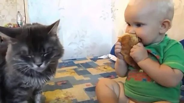 Kitten and baby together eating cake in bed