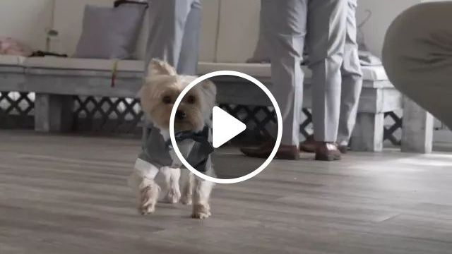 Puppy And Businessmen In Office - Video & GIFs | animals, pets, puppies, businessmen, male fashion, office, luxury furniture