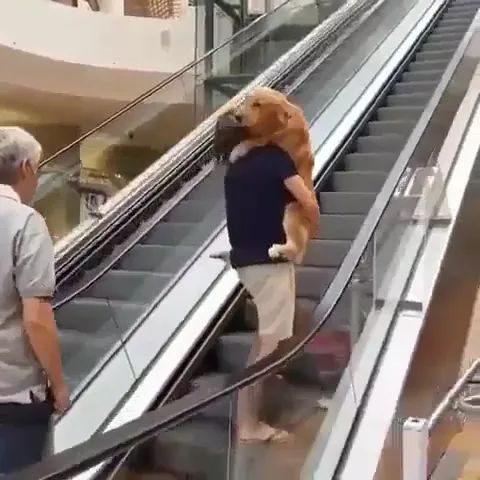 Dog gets scared and refuses to go up escalator , so man carries it like baby - Video & GIFs | dog, pet, adorable, scared, escalator , man