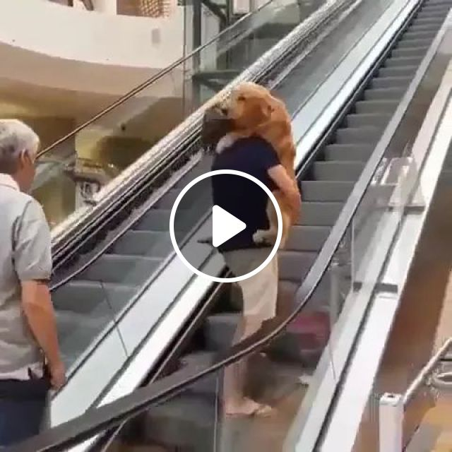Dog Gets Scared And Refuses To Go Up Escalator , So Man Carries It Like Baby - Video & GIFs   dog, pet, adorable, scared, escalator , man