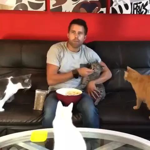 a man is eating with cat on the sofa in living room