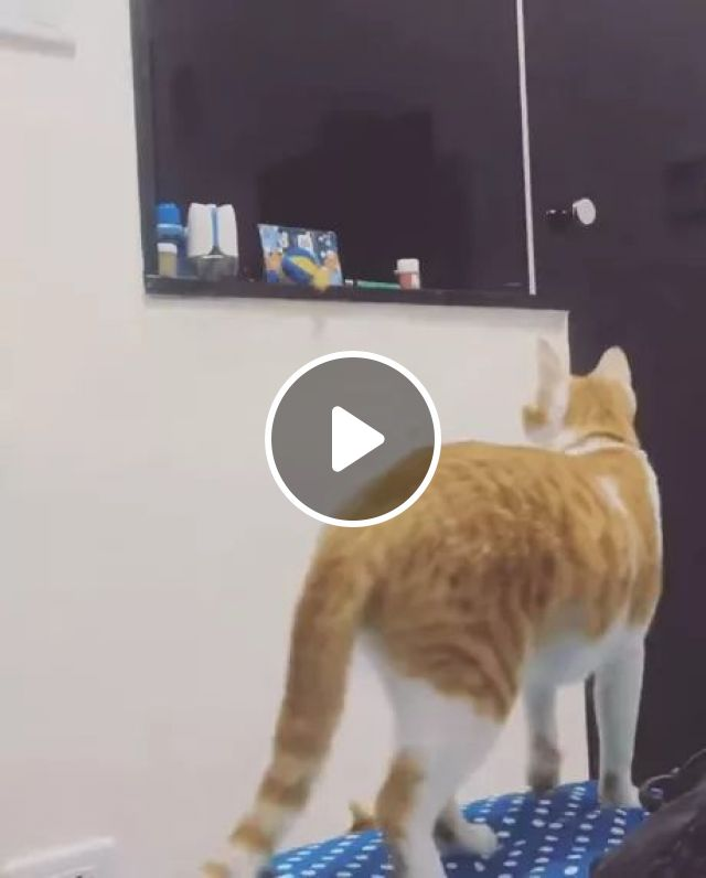 Mother Cat Helps Kitten Get Toys On The Shelf In Living Room - Video & GIFs | Cats mom, kittens, animals, pets, toys, shelves, living room