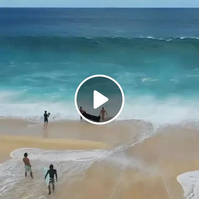 They Are Happy To Play With Waves On The Sand - Video & GIFs | sea travel, high waves, beautiful sea, Europe travel
