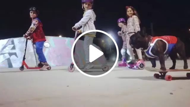 WE ARE PLAY - Video & GIFs | dogs, talent, performances, slides, street