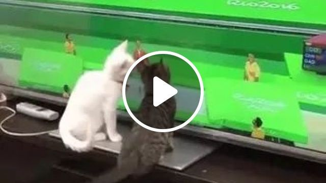 Cats Are Watching Baseball On Television In Living Room - Video & GIFs | cats, kittens, watching, television, touching, funny