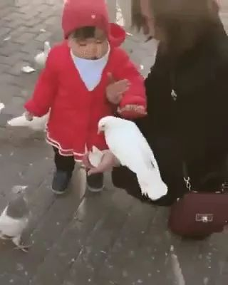 Baby and pigeons in Italian tourism